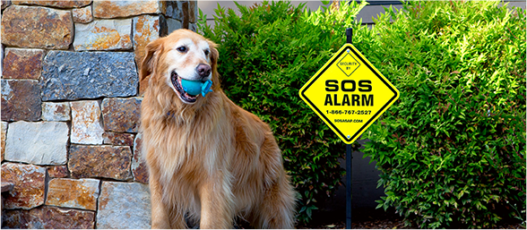 photo of dog in front of SOS Alarm home security system sign